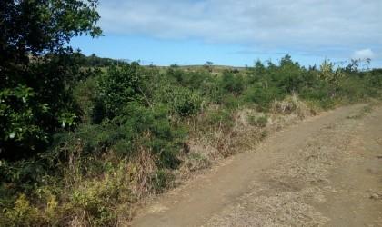 Bien à vendre - Terrain agricole -