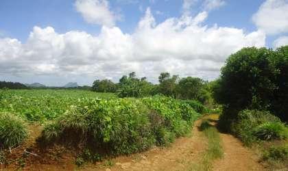Bien à vendre - Terrain agricole - curepipe