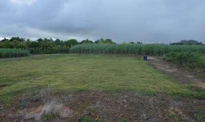 Bien à vendre - Terrain agricole - rose-belle