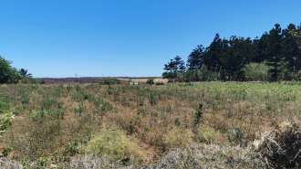 Residential land - near the Foret Daruty